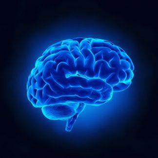 Статистика и мозги